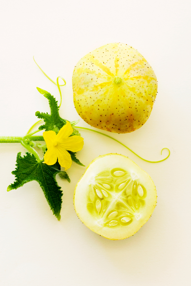 Lemon_Cucumber_0057